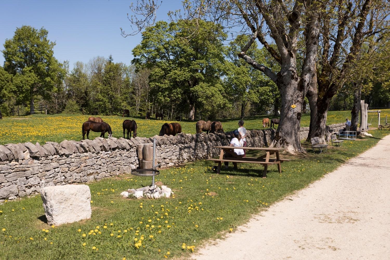 Fondation pour le cheval – Le Roselet/Les Bois/Le Jeanbrenin